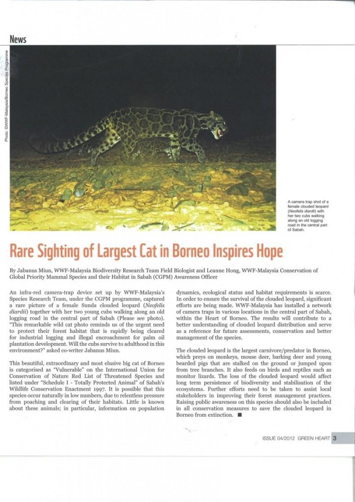 cat borneo hope