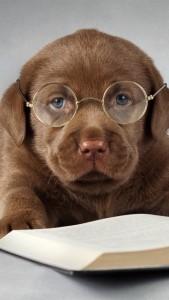 labrador_dog_read_book